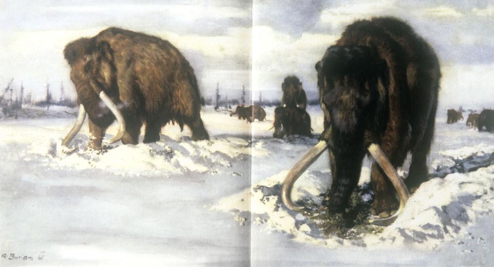 Illustrazioni dal 'Libro dei mammut', edizione 'Artiya' disegno di Zdenek Burian