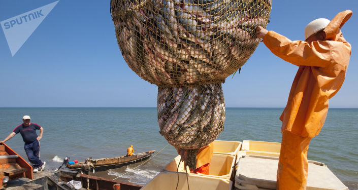 Pesca miracolosa a Sachalin - 2009
