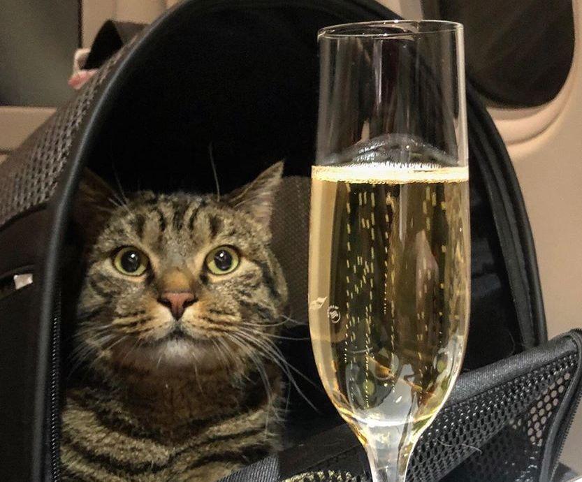 Il gatto Viktor in viaggio