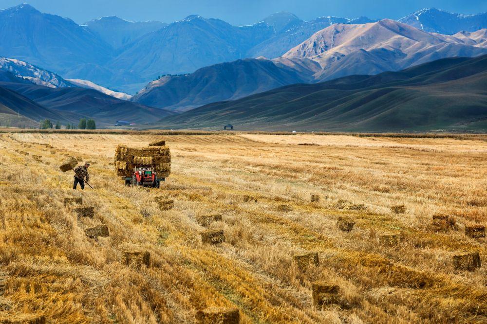 Un agricoltore cinese fa la raccolta.