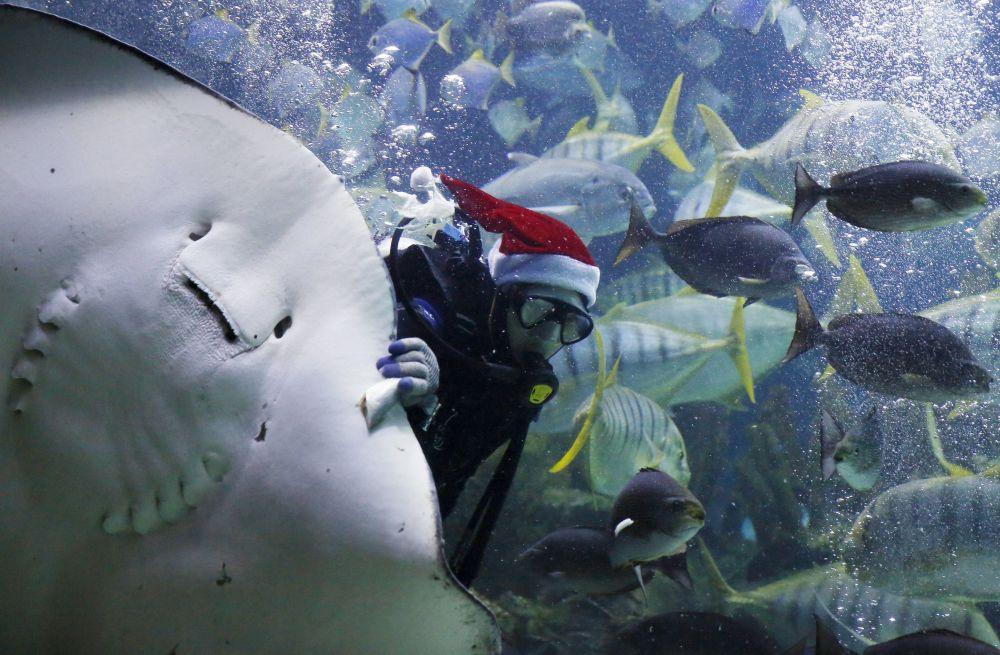 Il Capodanno subacqueo.