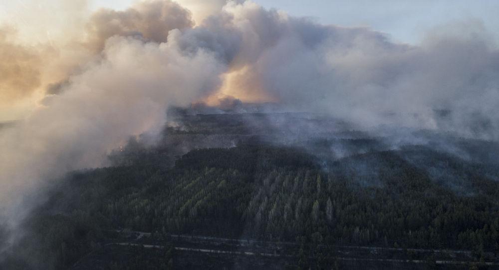 Bosco in fiamme (foto d'archivio)