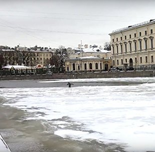 Un pinguino a San Pietroburgo