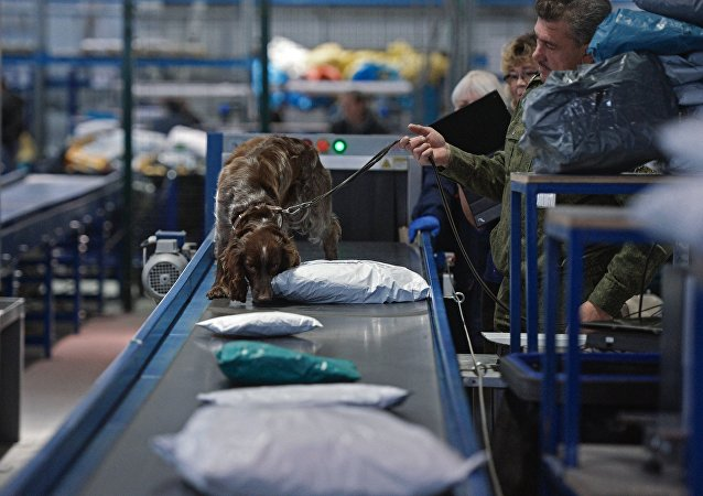 A Russian customs service employee with a dog check parcels for narcotic drugs and potent substances at the Tolmachovo international postal exchange office. (File)