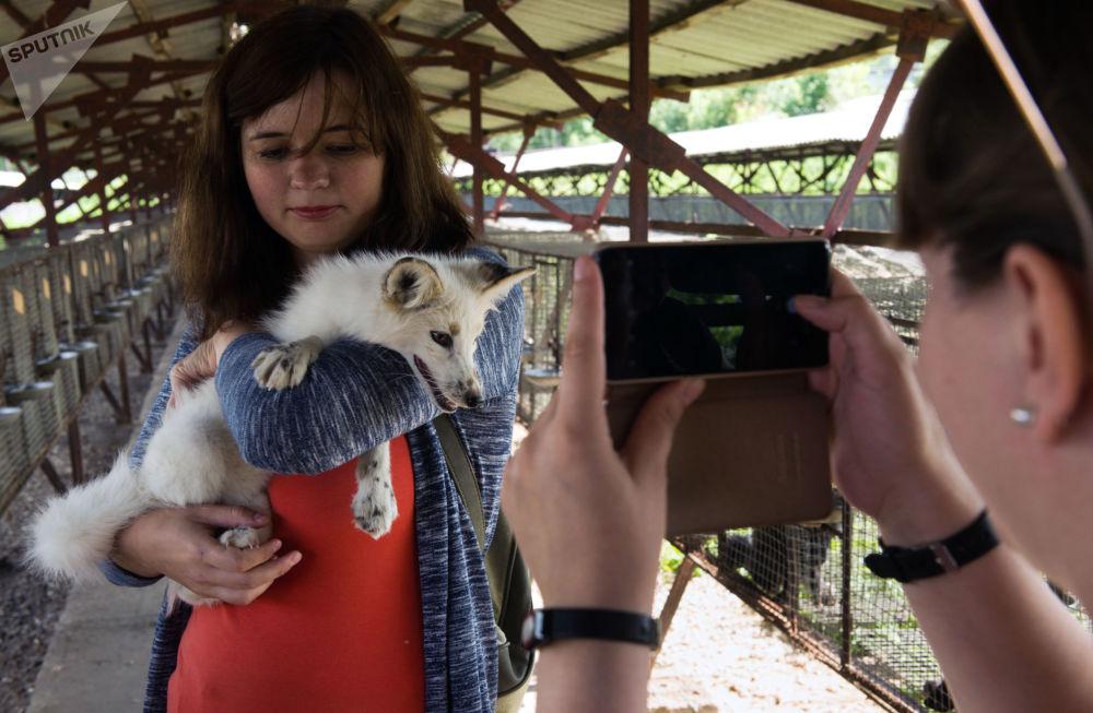 I visitatori della fattoria si scattano le foto con una volpe addomesticata.