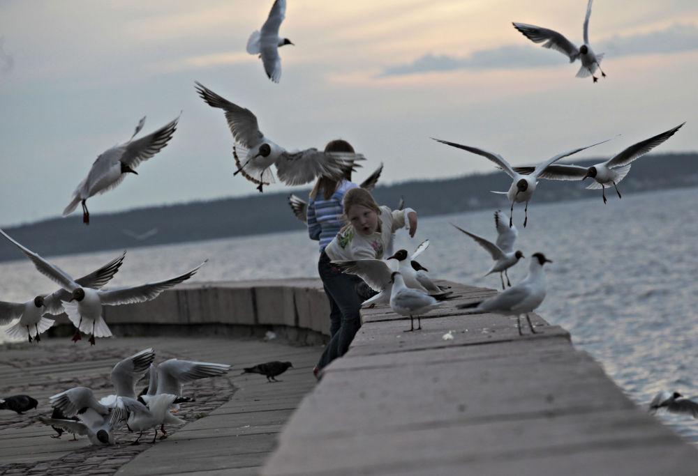 Un bambino gioca coi gabbiani sulle rive del lago Onega a Petrozavodsk.