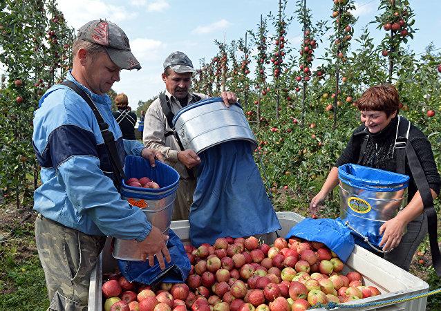 Un gruppo di lavoratori ucraini