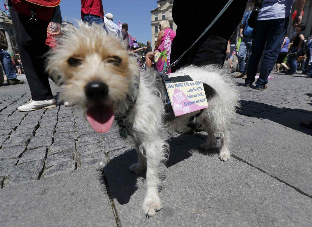 Un cane e il suo padrone partecipano alle proteste contro il vertice G7