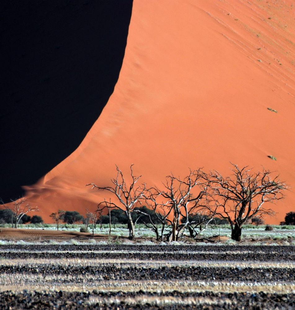 Le 17 foto più strane da tutto il mondo