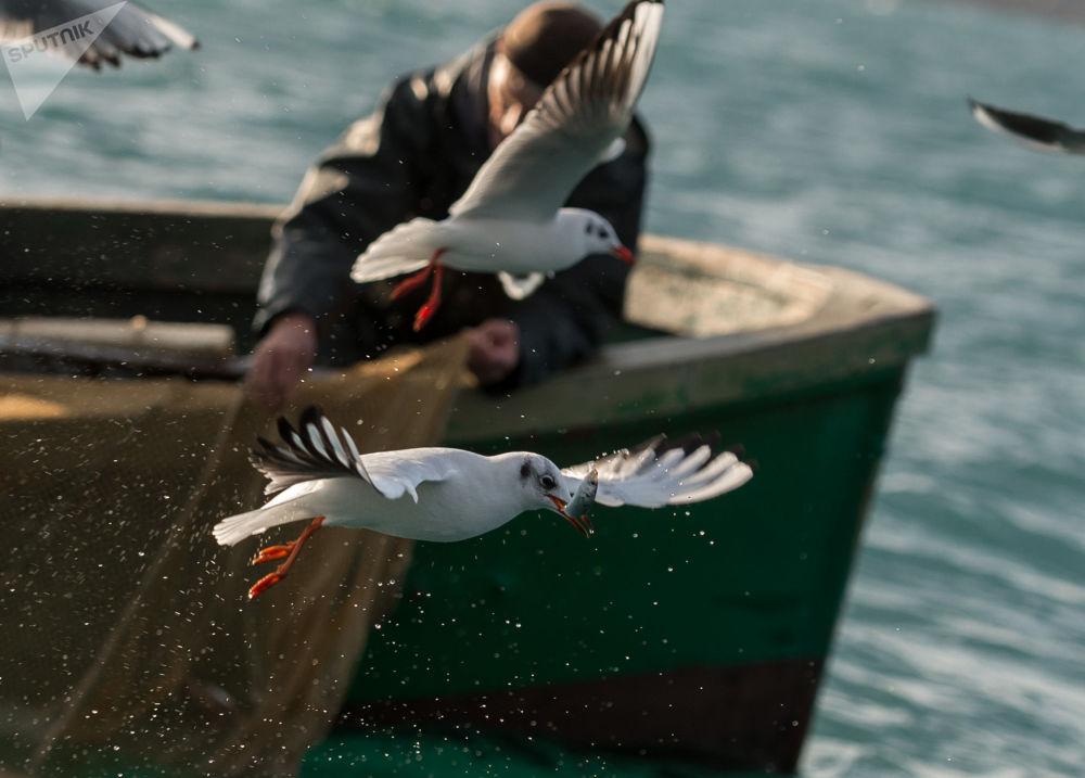 Un pescatore visto durante la pesca nel Mar Nero a Sebastopoli.