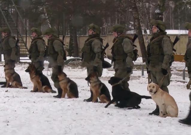 I genieri militari russi hanno condotto delle esercitazioni