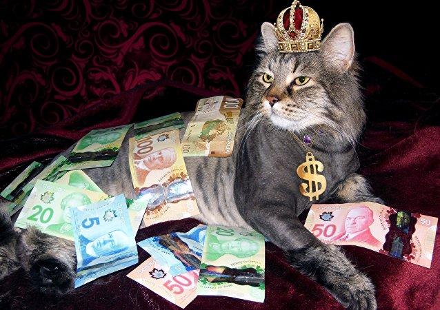 Il gatto ricco