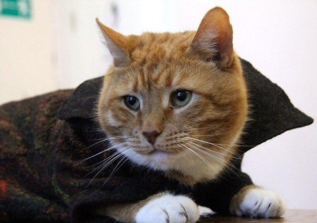 Il gatto Filemon