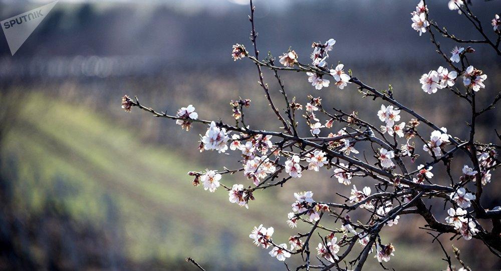 Primavera in Crimea