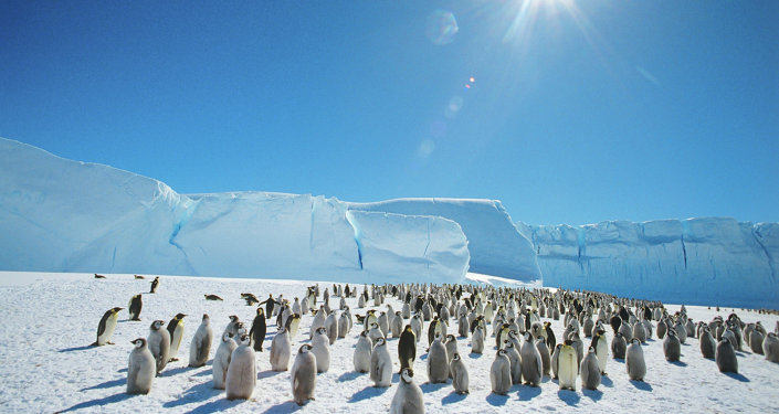 Emperor penguins near the Mirny Soviet Antarctic research station, 1989