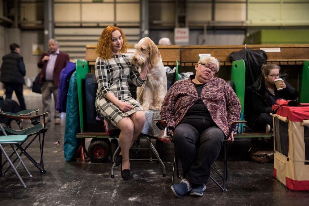 Il Crufts dog show al Centro esposizioni NEC a Birmingham, Regno Unito.