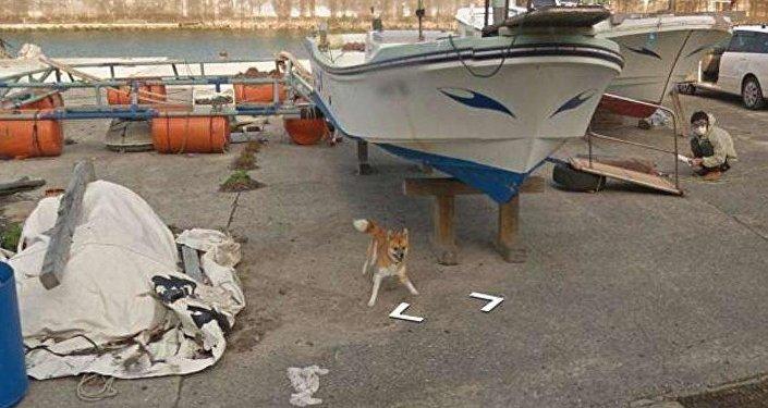 Il cane in questione ♥