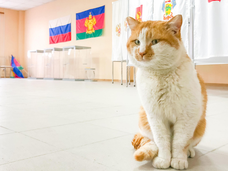 Il gatto ufficiale del Ponte della Crimea