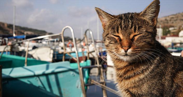 Un gatto a Balaklava