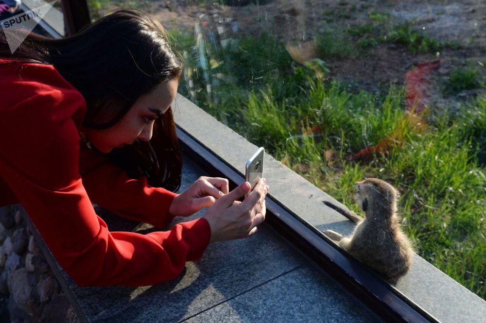 Una ragazza fa una foto del suricato neonato nello zoo di Mosca.