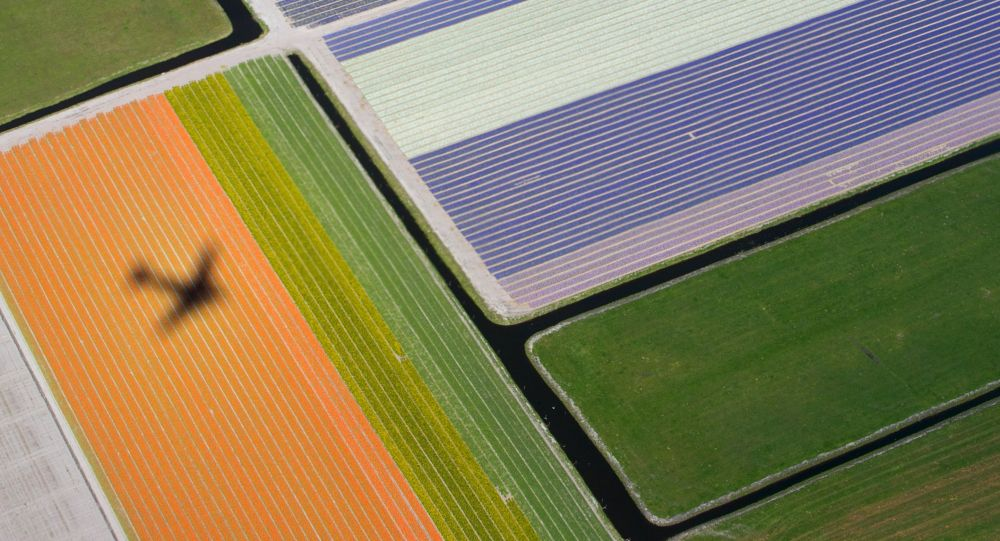 Campi di fiori in Olanda