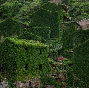 L' isola cinese dove la natura si è ripresa tutto quello che era suo