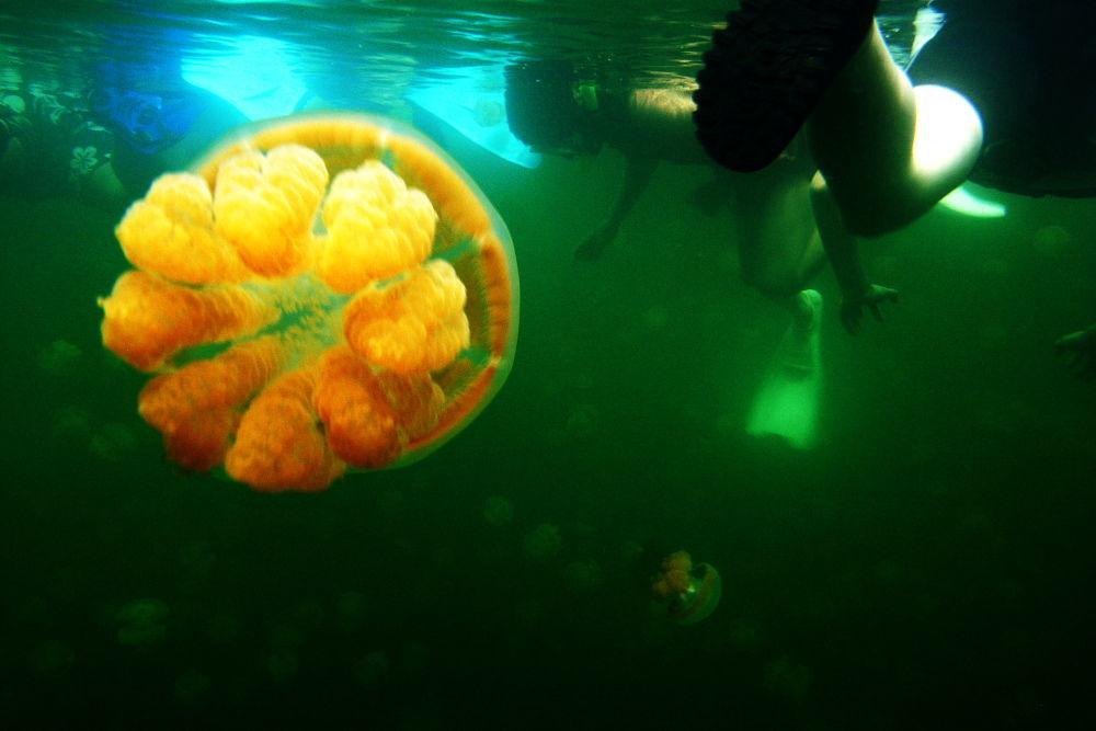 Il lago delle meduse