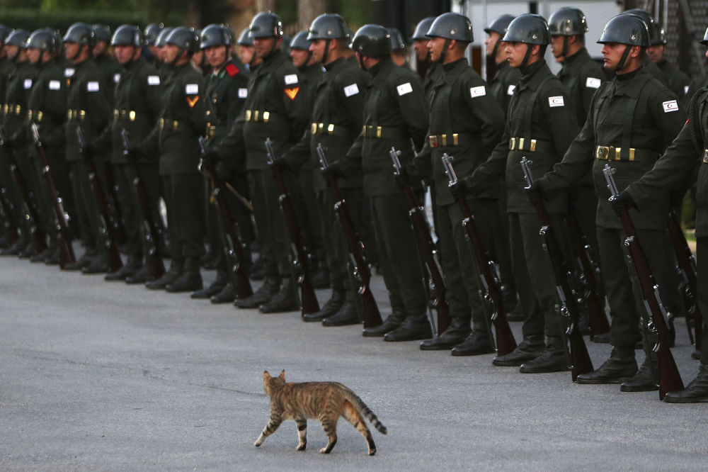 Un'ospite a sorpresa alla cerimonia d'arrivo di Recep Tayyip Erdogan a Nicosia, Cipro.