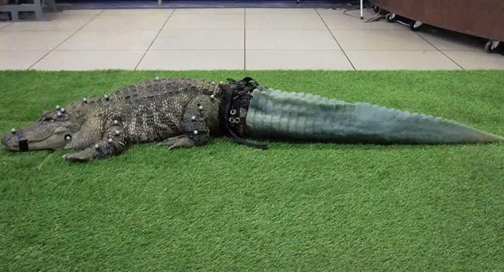 All'alligatore hanno stampato la coda con una stampante 3D