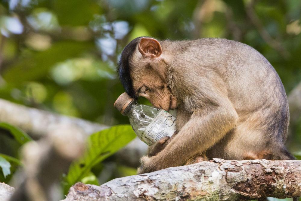 Foto 'Not in My Forest (non nella mia foresta)' del fotografo malese Calvin Ke, vincitore della nomination Highly Commended Environmental Photographer of the Year 2018