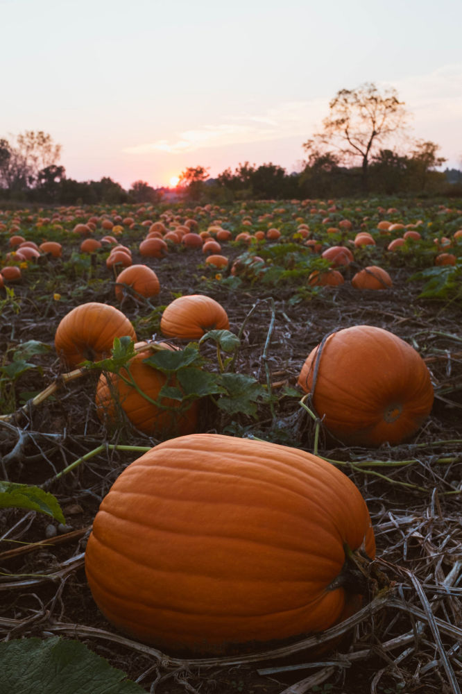 50 sfumature d'autunno