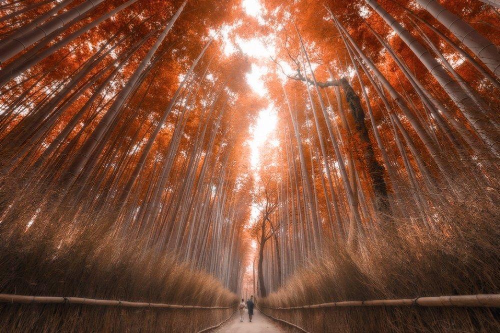 Un foresta di Bamboo a Kyoto