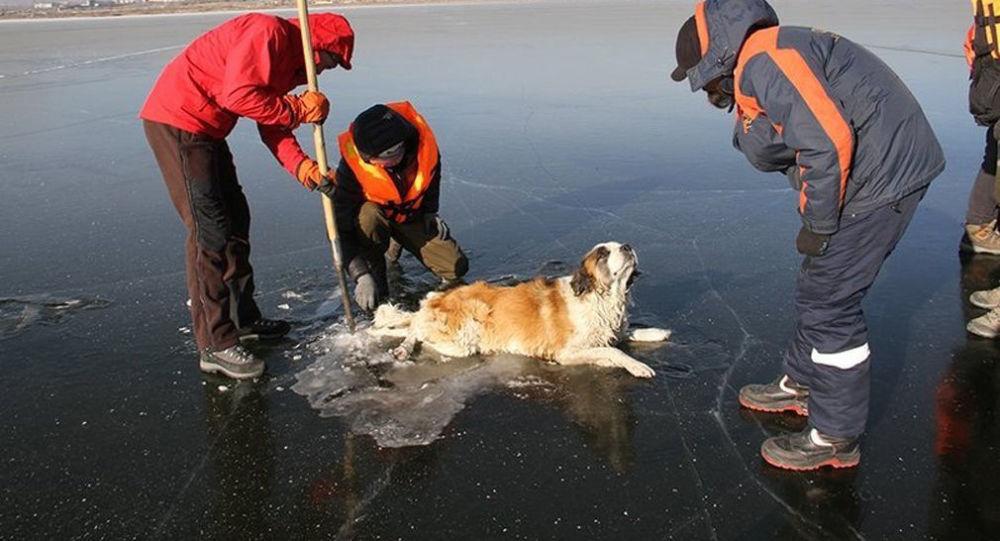 Russia, salvato cane in un lago ghiacciato