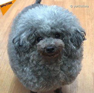 E' un cane o una nuvola?