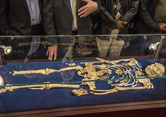 Scoperta nuova sottospecie di australopiteco