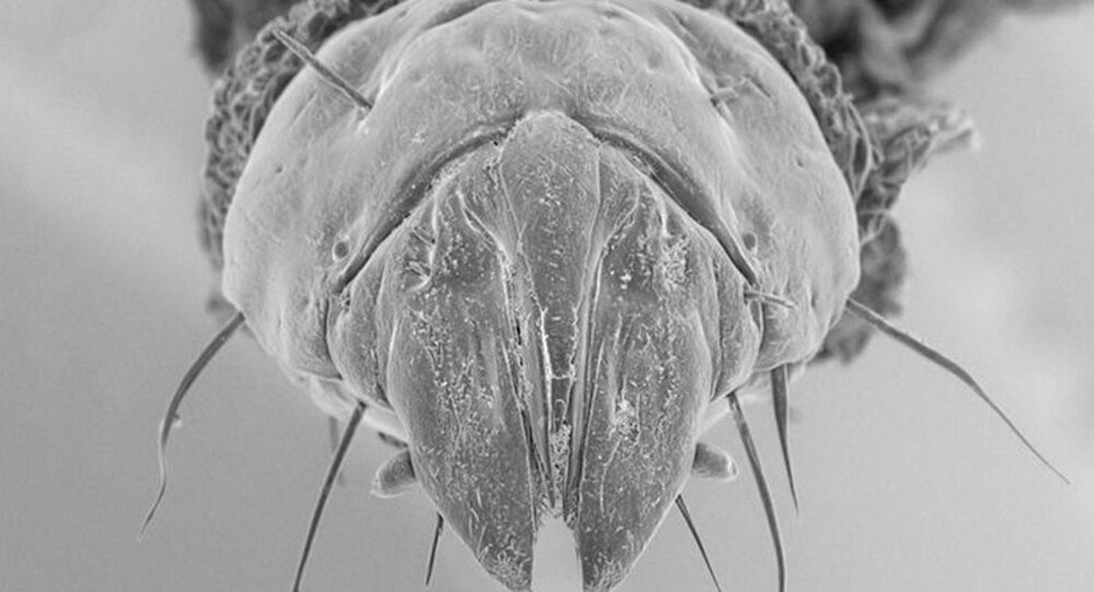 La mosca-killer