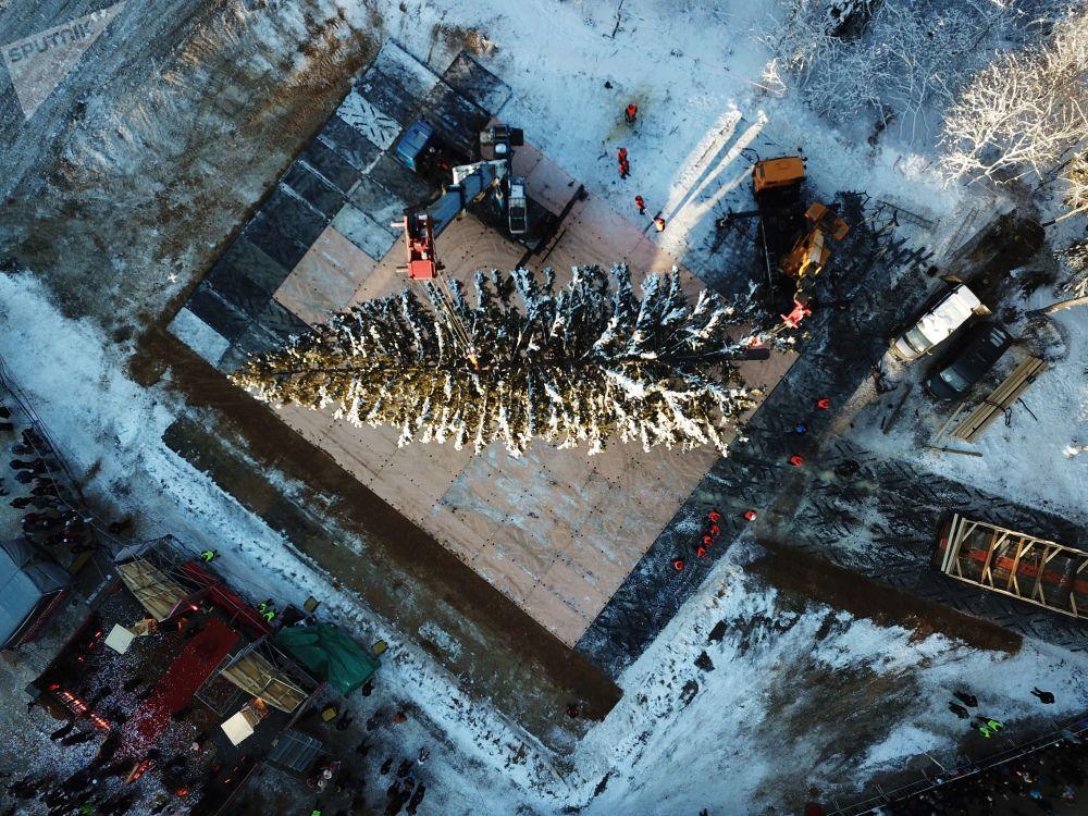 Taglio dell'albero di Natale principale russo.