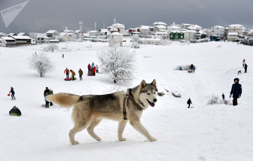 Un cane alla montagna Ai-Petri.