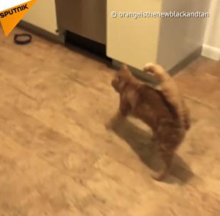 Questo gatto può sembrare ubriaco