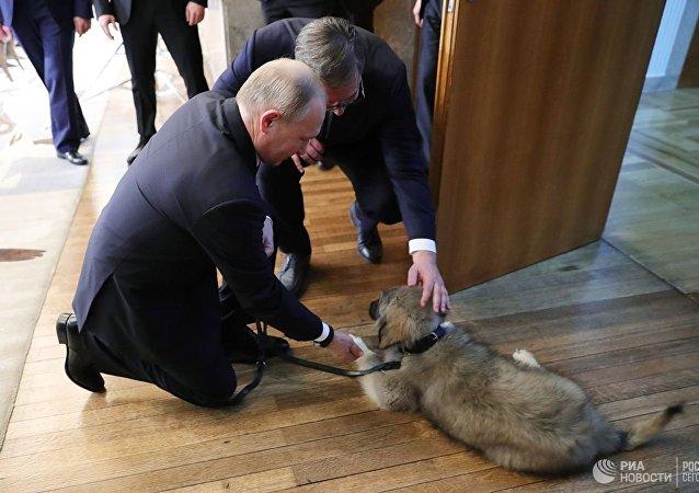 Putin con il cucciolo di quattro mesi di nome Pasha