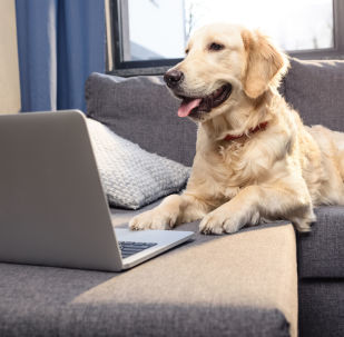 Il cane usa l'Internet