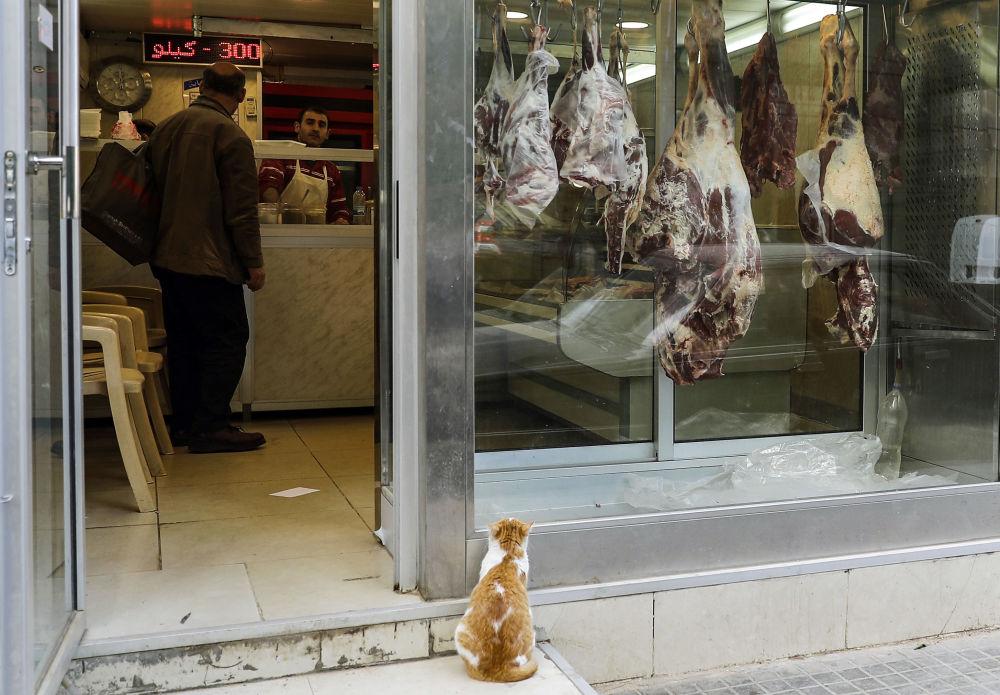 Un gatto guarda le vetrine di una macelleria a Beirut, Libano.