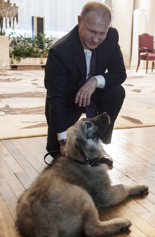 17 gennaio 2019, Putin insieme al cucciolo di pastore di Ciarplanina donatogli dal presidente serbo Aleksandr Vucic