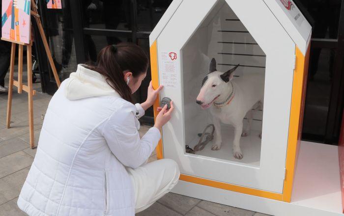 Il primo parcheggio per cani in Russia