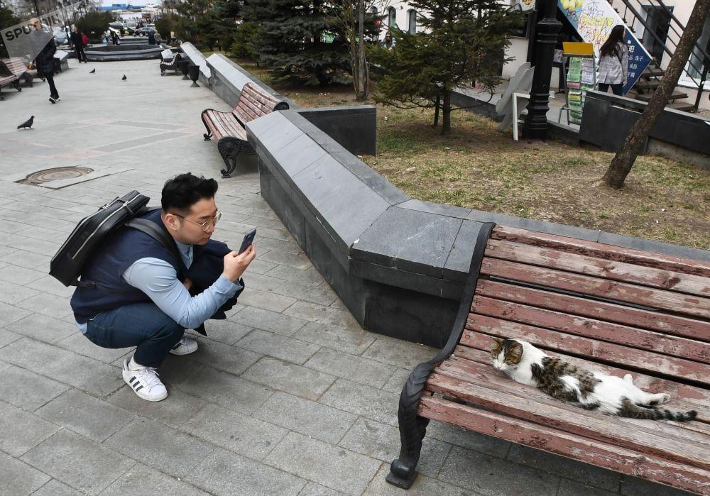 Una turista fotografa una gatta a Vladivostok, Russia.