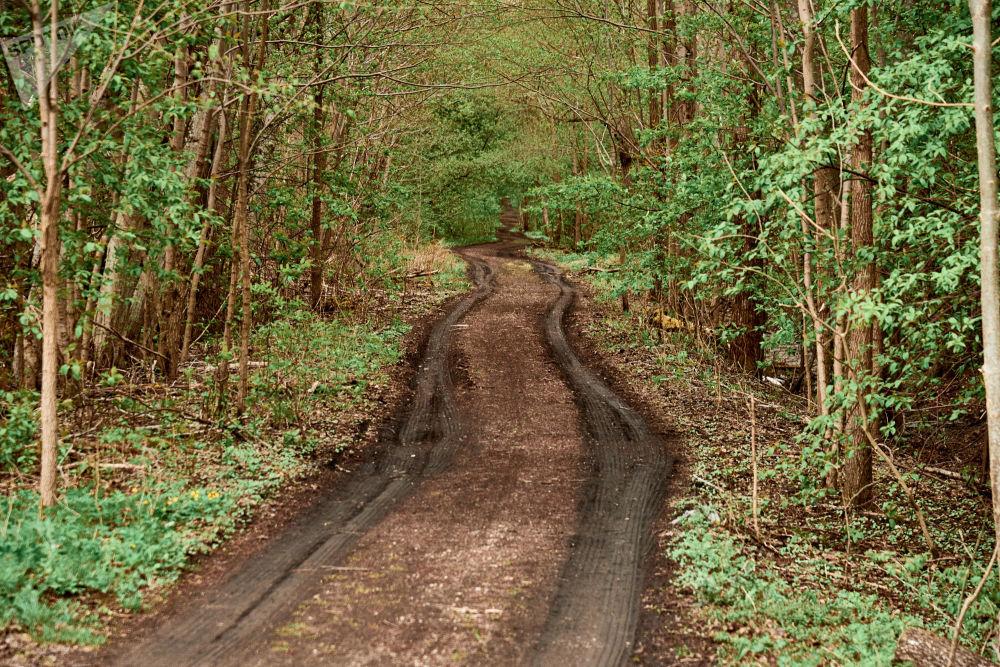 Una stradina in terra battuta porta nel bosco più profondo