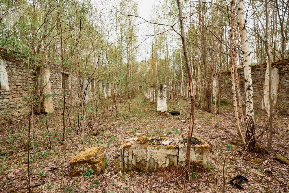 Gli alberi crescono dove una volta venivano conservate le armi