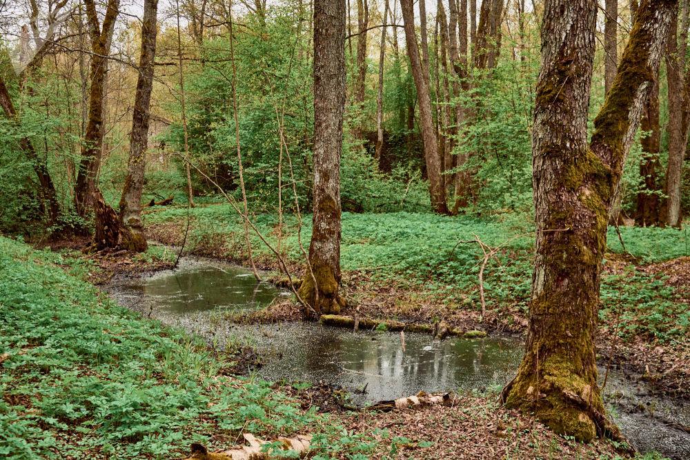 Uno dei canali che scorrono nel bosco: sembra di stare in uno dei racconti dei fratelli Grimm