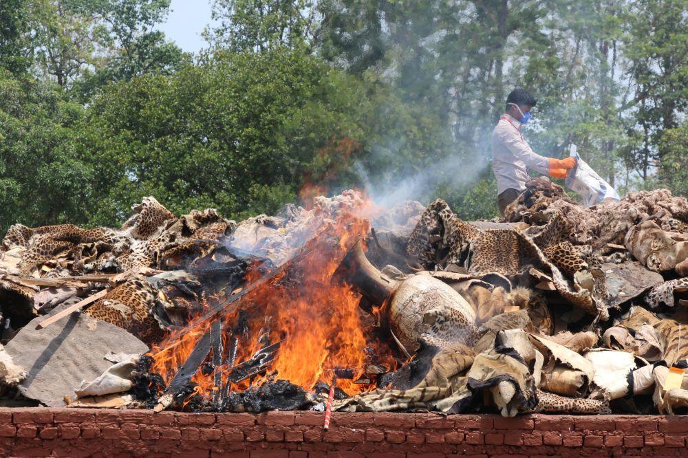 Nepal, un falò di pelli di animale sottratte ai bracconieri