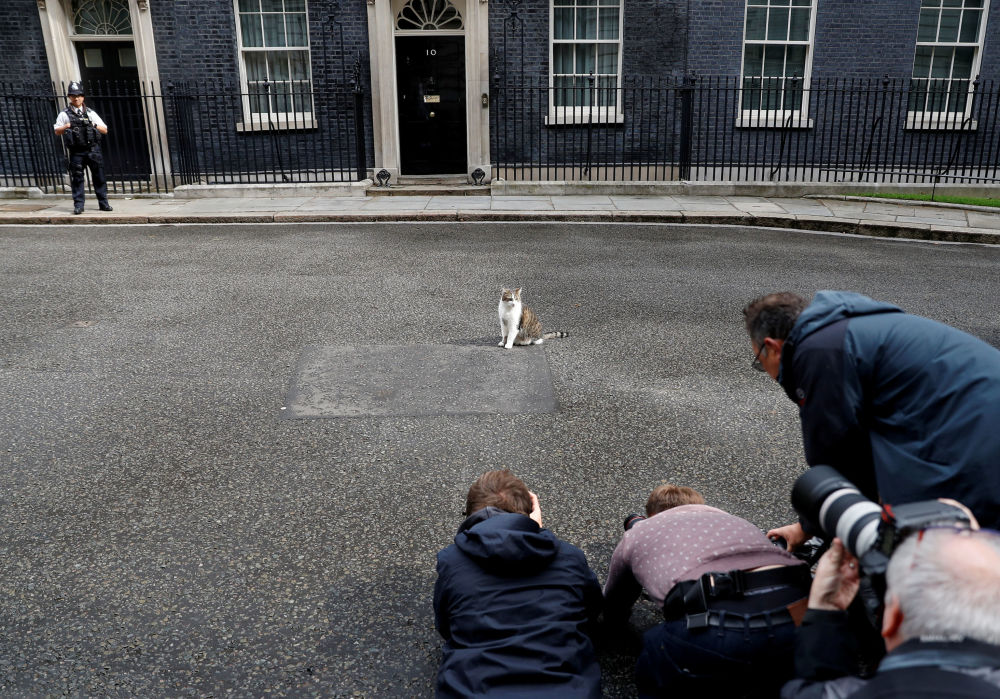 Gatto Larry fotografato dai media davanti alla sede dei premier brittanici in Downing Street a Londra.